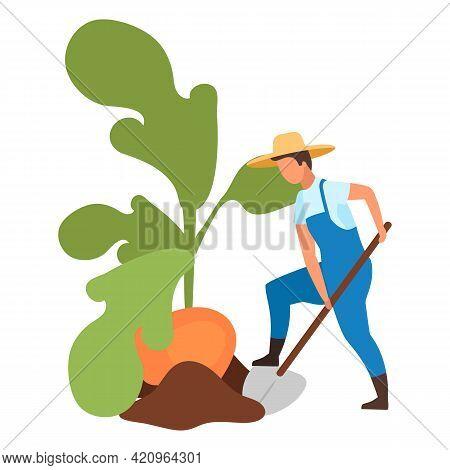 Autumn Harvest Flat Vector Illustration. Farmer Harvesting Big Turnip With Shovel Cartoon Character.