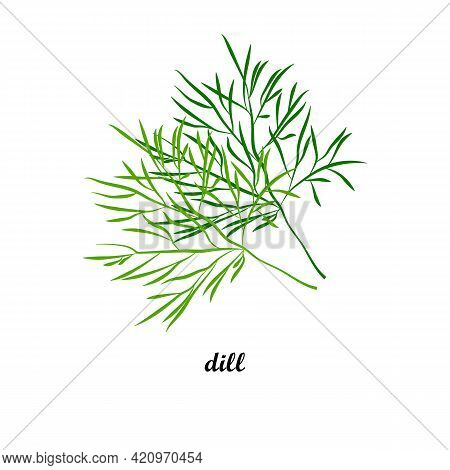 Vector Illustration Of Dill With Title Text Isolated On White Background. Leafy Vegetables.