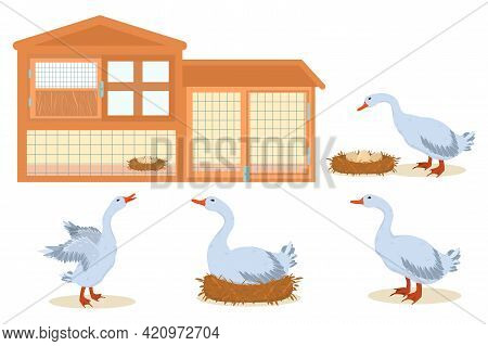 Vector Illustration On The Farm Theme. Domestic Geese And Chicken Coop Isolated On White Background