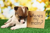 Abandoned little puppy seeking home on green grass on natural backgraund poster