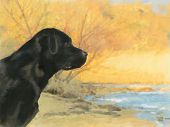 oil painting portrait of hunting black labrador in autumn poster