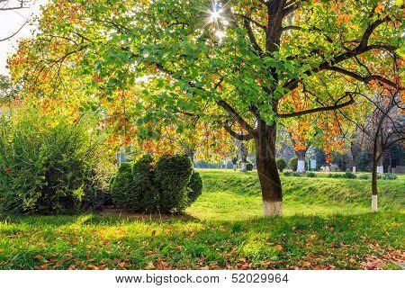 Sun Rays In Autumn Tree Foliage