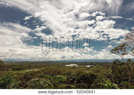 Rainforest In The Napo River's Basin