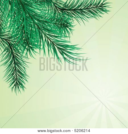 Framework From Pine Branches. Vector Illustration