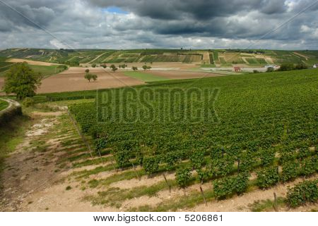 Vineyard Near Sancerre France