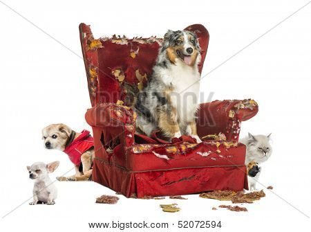Group of pets on a destroyed armchair, isolated on white