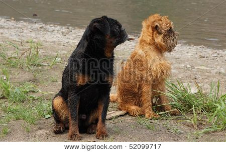 Serious dogs