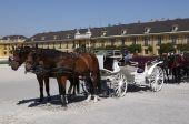 Horse team in a courtyard of Schonbrunn Palace. Vienna Austria poster