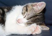 kitten fast asleep poster