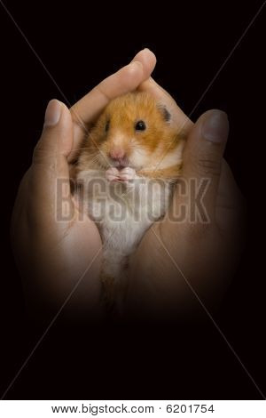 Hamster being held in woman's hand