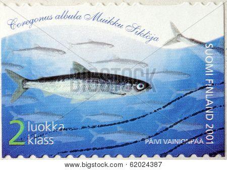 European Cisco Stamp