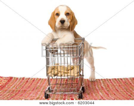 Cute Beagle puppy with miniature shopping cart