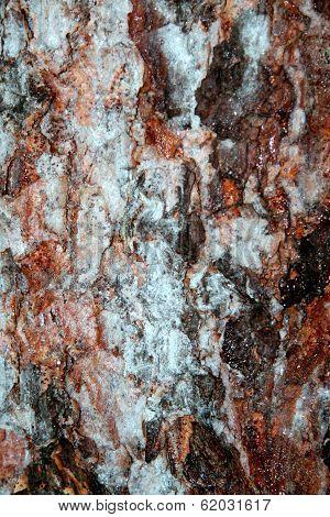 Tree bark in winter