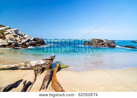 Beach And Driftwood