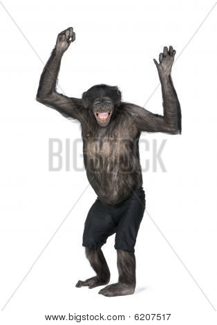 Portrait Of Smiling Chimpanzee In Shorts With Arms Raised
