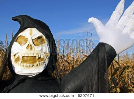Death in a corn field