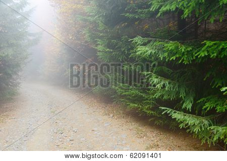 Forest road - autumn landscape