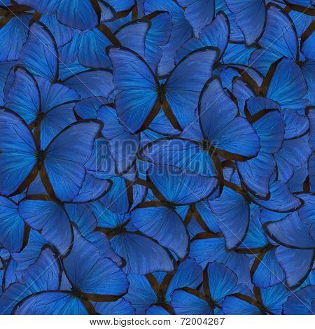 seamless background from blue morpho butterflies