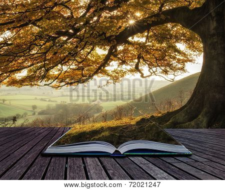 Book Concept Stunning Autumn Morning Sunlight Lights Landscape Through Golden Tree