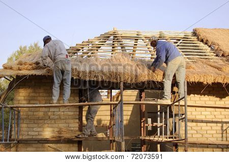 Thatchers Laying A Grass Roof