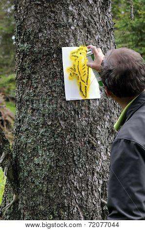 Forester Is Marking Habitat Tree