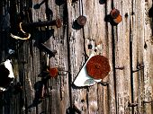 Close up of a utility pole covered with nails, tacks, and staples used to post signs through the years. poster