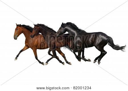 Three horse run isolated