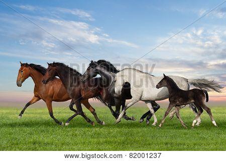 Horse run gallop group