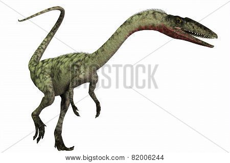 Coelophysis On White