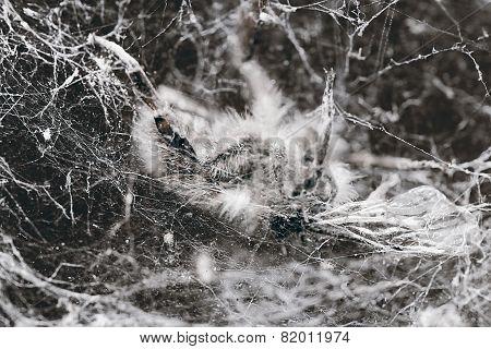 A life webbed away