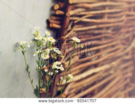 Field Daisies On The Wicker Fence Background