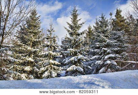 Western New York Winter