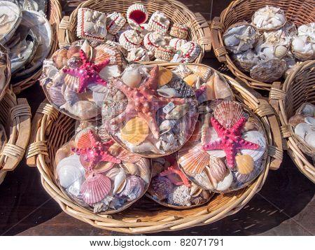 Assorted Shells