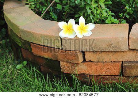Two Plumaria On Brick
