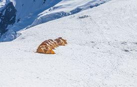 Tents at Lenin peak camp 3 20000 ft at mt. Razdelnaya. Pamir mountains Kyrgyzstan