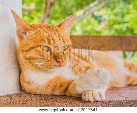 image of moody cat on day time poster