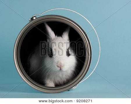 cute little rabbit in a paint bucket as concept blue background poster