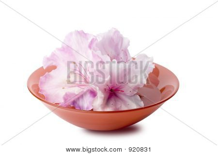 White Azalias In A Red Glass Bowl With Clipping Path