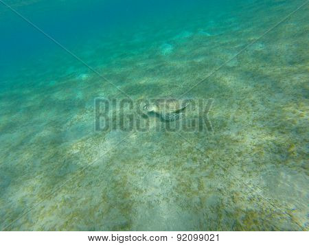 Turtle sitting on the sea bottom. underwater shot