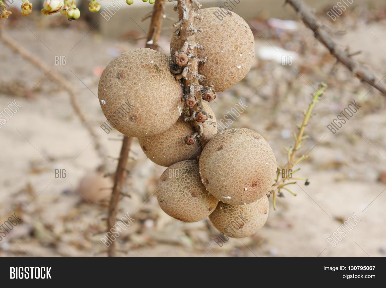 Sal most beautiful image photo free trial bigstock sal is the most beautiful flowers ever seen izmirmasajfo