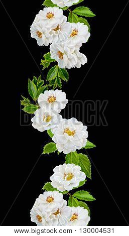 floral pattern white roses composition, Illustration of a floral background