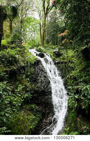 A small waterfall in the subtropical forest in the rain.