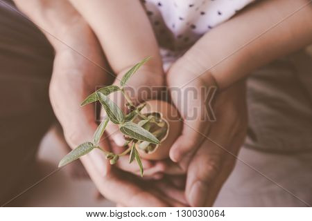 child and parents hands holding young plants in eggshellsoft selective focus