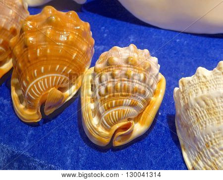 Sea shells closeup on exhibition hall in Taiwan poster