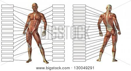 3D illustration of a concept or conceptual human man anatomy and muscle textbox isolated on white background