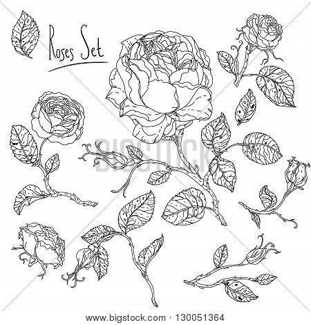 Uncolored heart shape frame by roses in zenart style, could be used for Adult colouring book. Hand-drawn, doodle, vector the best for your design, wedding cards, coloring book. Black and white.