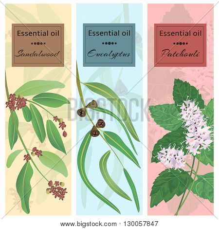 Essential oil set collection. Sandalwood eucalyptus patchouli banner set. Vector illustration EPS 10.