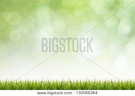 Fresh spring grass and green nature blurred background - use for display or design element in natural spring concept