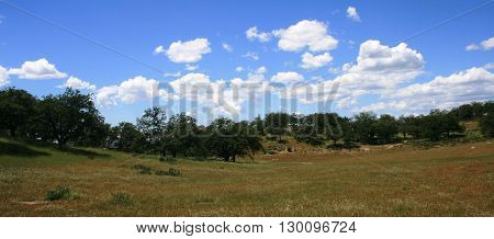 Oaks in a meadow beneath blue sky and clouds, California