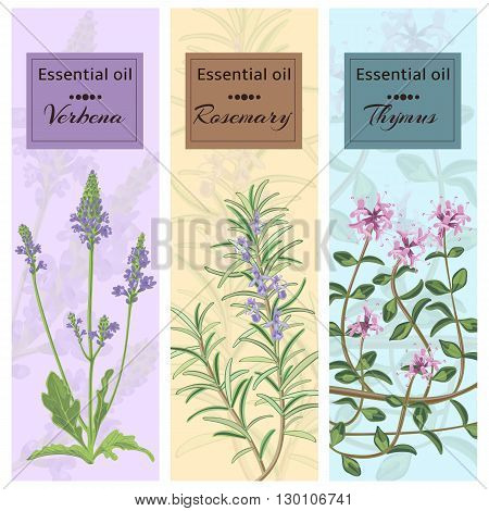 Essential oil set collection. Verbena rosemary thymus banner set. Vector illustration EPS 10.